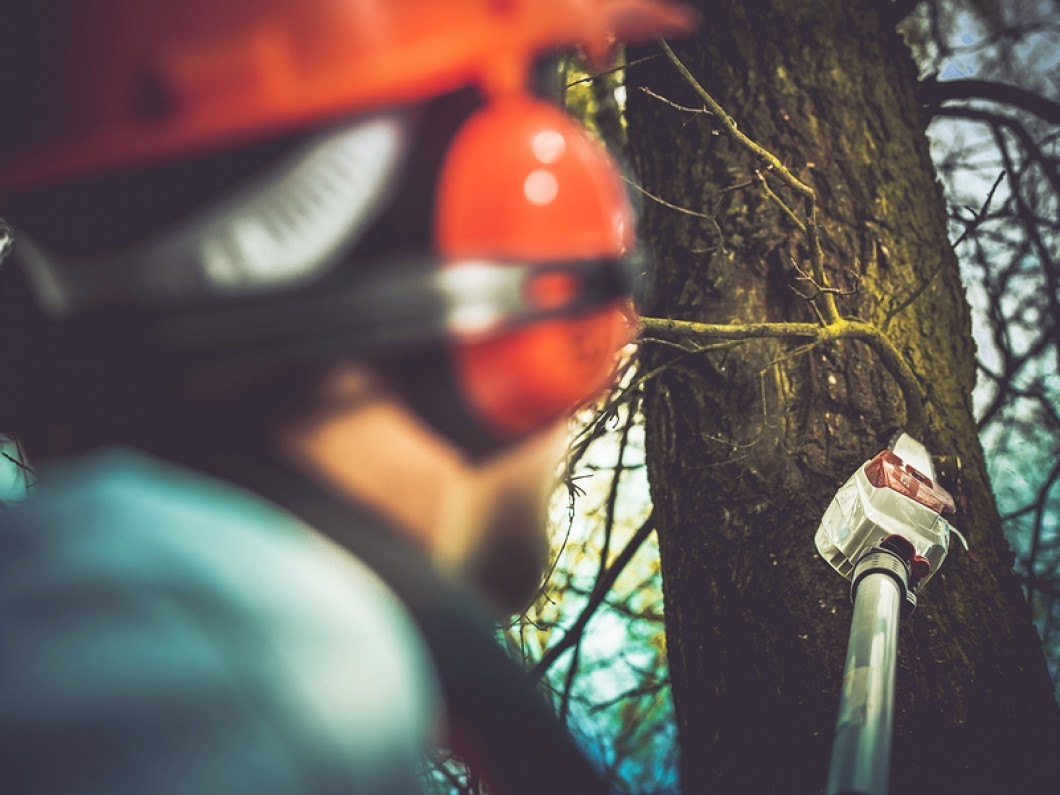 Find out what we can do for your trees
